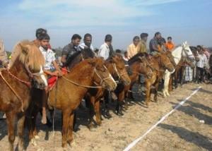 horse race at Tangail