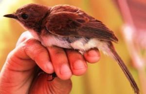 Bird ring 2