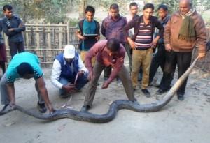 python at sylhet