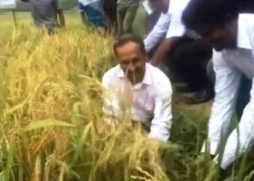 brri dhan64 field day at ranpur