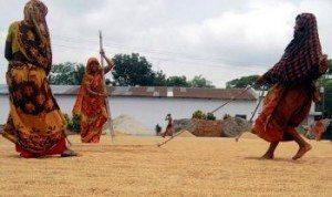 Chatal - Jhenaidah