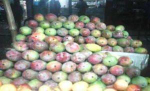 Sundori-Mango